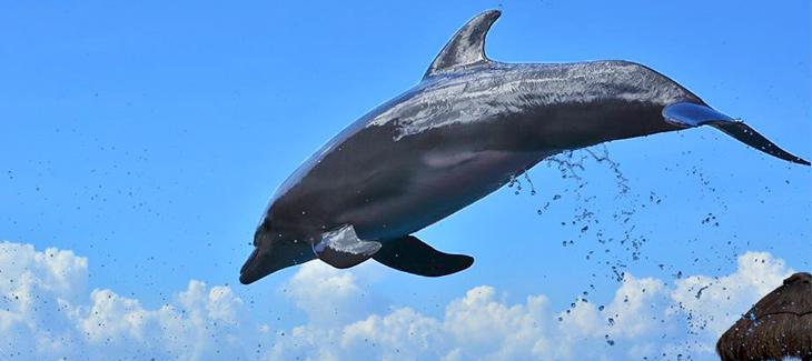 10 cosas que no sabías sobre los delfines