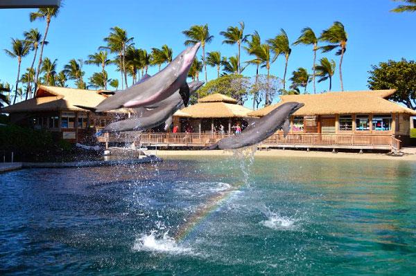 15 mejores lugares para nadar con delfines en el mundo [dolphin-quest]