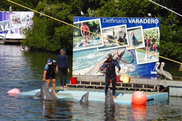 15 mejores lugares para nadar con delfines en el mundo [dolphinaris-Varadero]