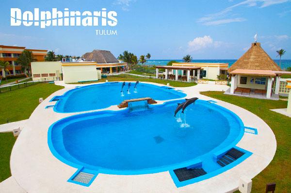 15 mejores lugares para nadar con delfines en el mundo [dolphinaris-tulum]