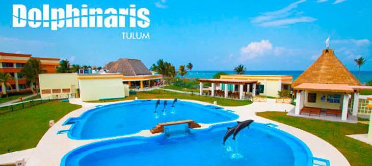 14 mejores lugares para nadar con delfines en el mundo [Una Guía]