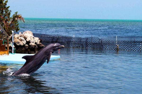 15 mejores lugares para nadar con delfines en el mundo[research]