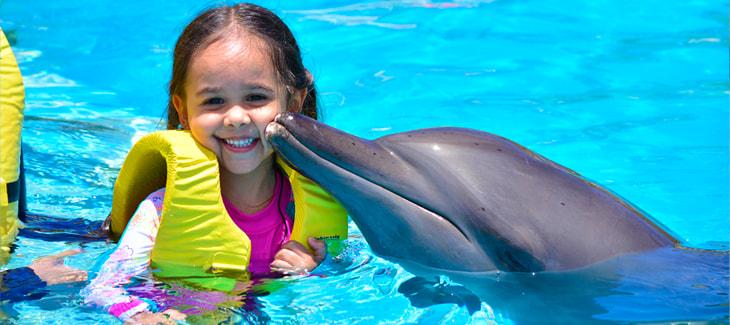 Nadar con delfines, los 10 lugares más populares en el mundo