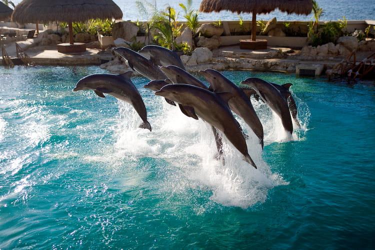 ¿Por qué nadar con delfines en Dolphinaris?