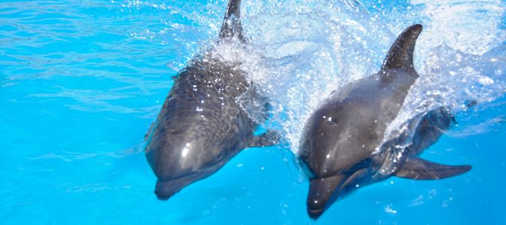 Los delfines y su comportamiento