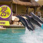 cozumel-all-inclusive-dolphin-trainer-program1