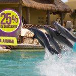 treinador-golfinhos-mais-tudo-incluido-dolphinaris-cozumel1