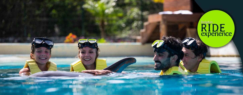 Experiencia de nado y paseo con delfines en Cozumel