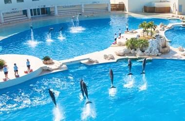 Nadar Con Delfines en la Zona Hotelera de Cancún en Dolphinaris