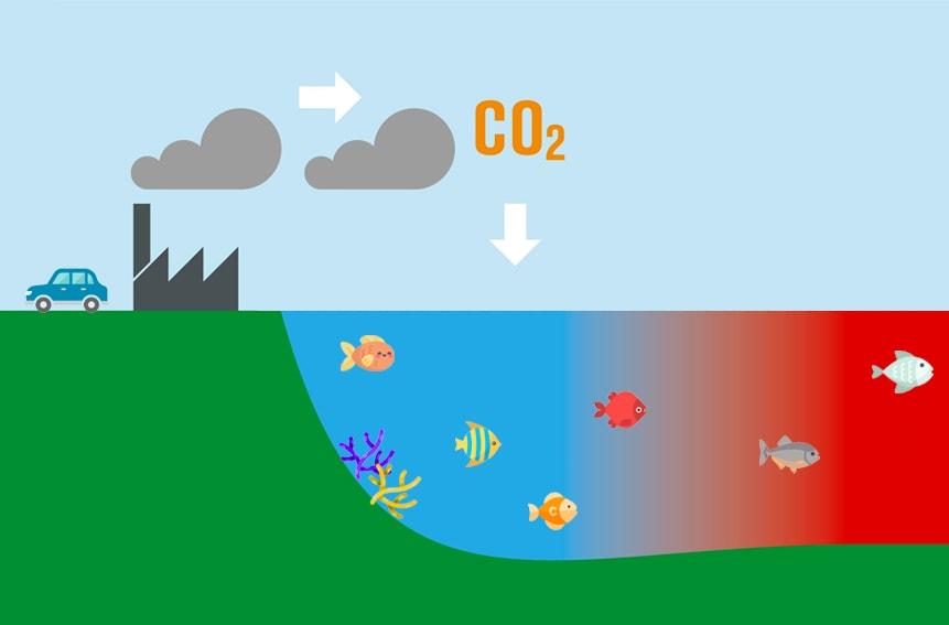 5 Consecuencias Sobre La Acidificación Del Océano Dolphinaris