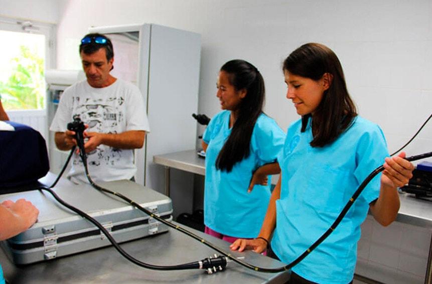 Veterinarios en Dolphinaris