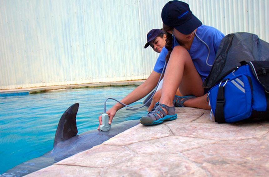 Aquavet en Dolphinaris