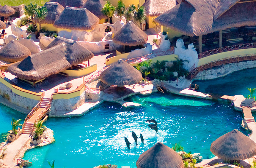 cozumel-Best Dolphinariums In the Mayan Riviera