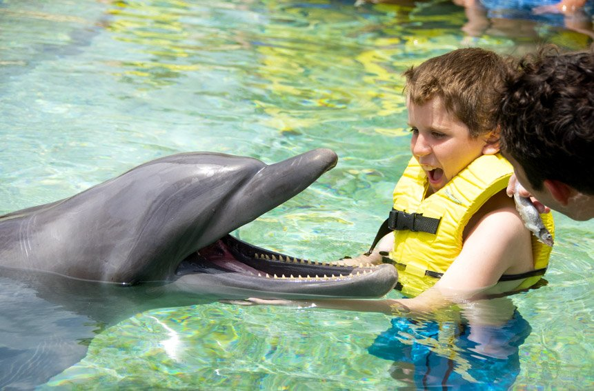 Smiling dolphin and infant