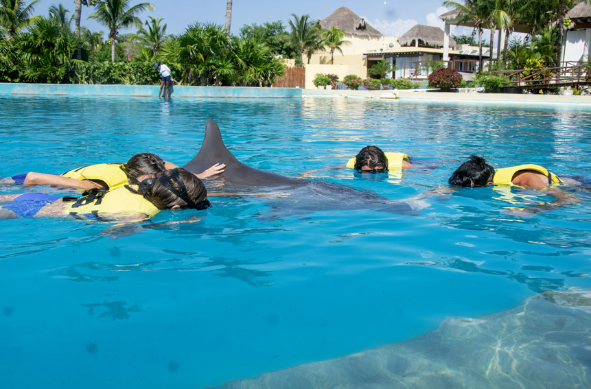 People swimming with a Dolphin