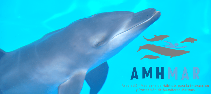Dolphin Swims in Cancun: What is the AMHMAR?