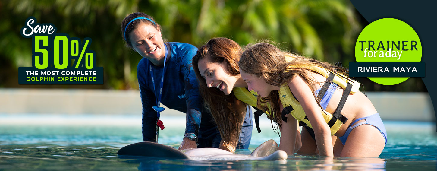 With the Trainer for a Day program become one of our dolphin trainers for a day!