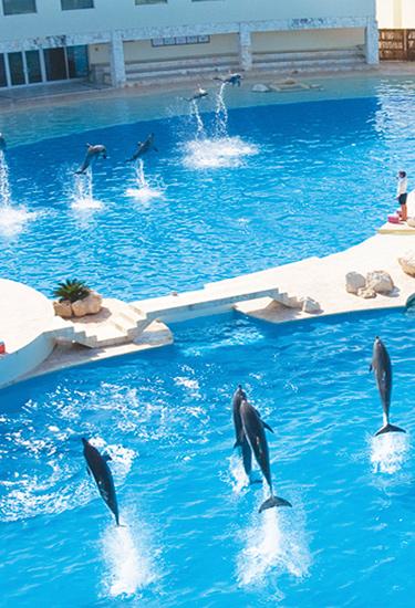 Dolphinaris Cancun
