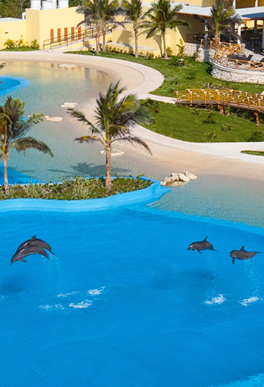 Swim WIth Dolphins In Cancun Plus Free Admission To Ventura Park Cancun with Unlimited Meals and Non Alcoholic Drinks