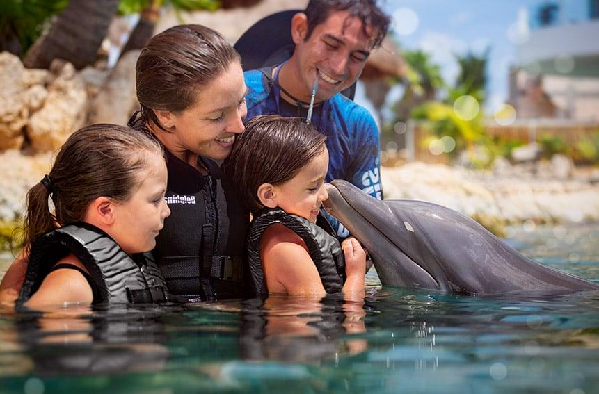 Experiencias Inspiradoras de Nado con Delfines