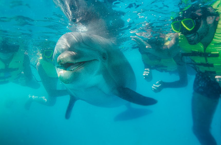 dolphinaris-best-place-to-swim-with-dolphins