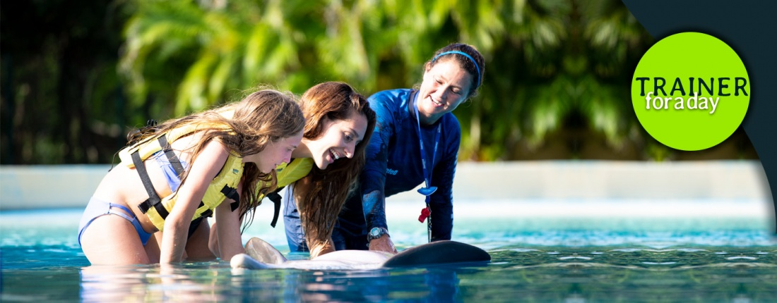 people touching a dolphin's belly along a dolphin trainer