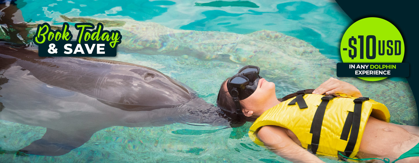 Book Today & Save 10USD in any Dolphin Swim Program
