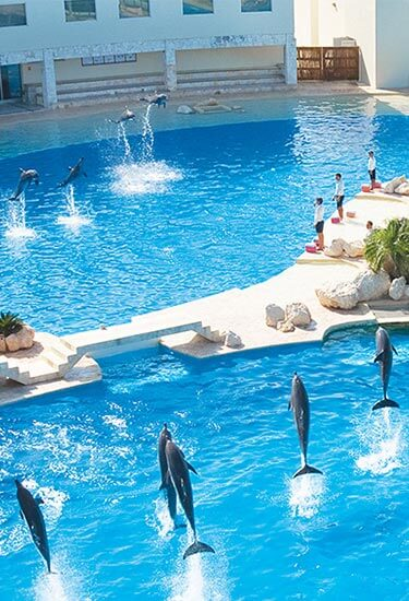 Swim With Dolphin in Cancun's Hotel Zone