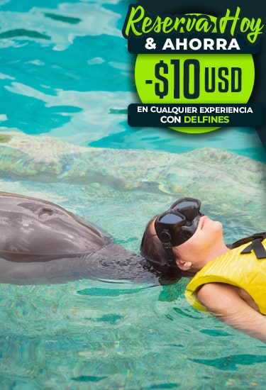 Reserva Hoy Tu Nado Con Delfines En Línea y Ahorra 10 USD