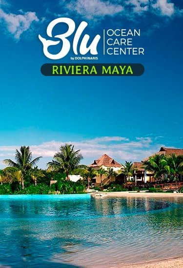 Swim with Dolphins at Blu Ocean Care Center Riviera Maya