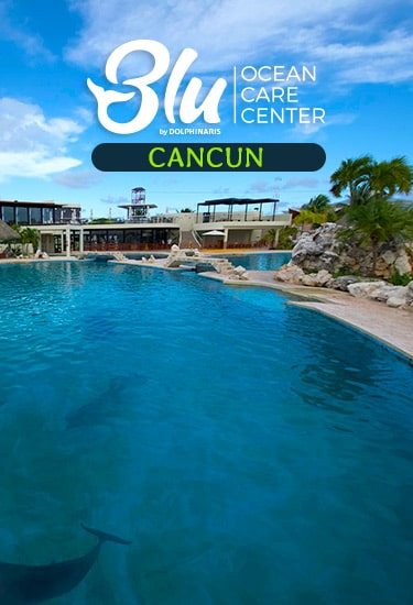 Swim with Dolphins at Blu Ocean Care Center Cancun