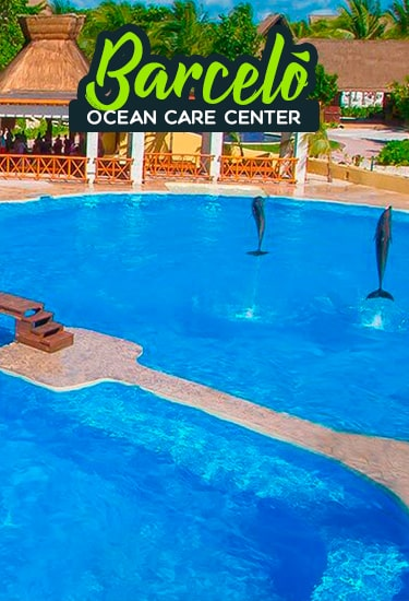 Swim with Dolphins at Riviera Maya in the Barceló maya Beach Hotel