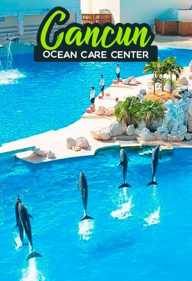 Swim with Dolphins at Cancun