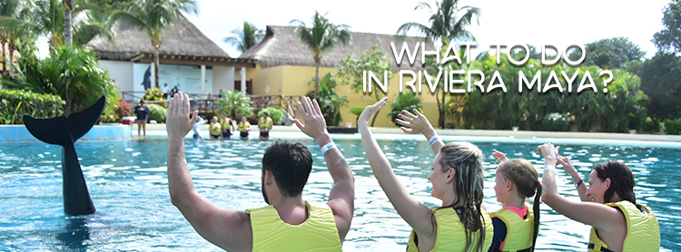What to do in Riviera Maya: Half a Day in The most exclusive Dolphinarium.