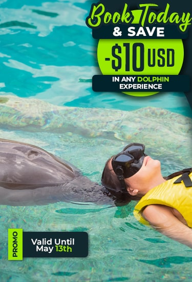 Book Today & Save 10USD in any Dolphin Swim Program