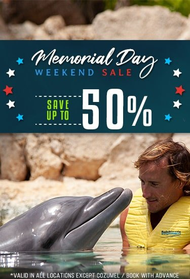 Memorial Weekend Deals - Swimming with Dolphins at Dolphinaris