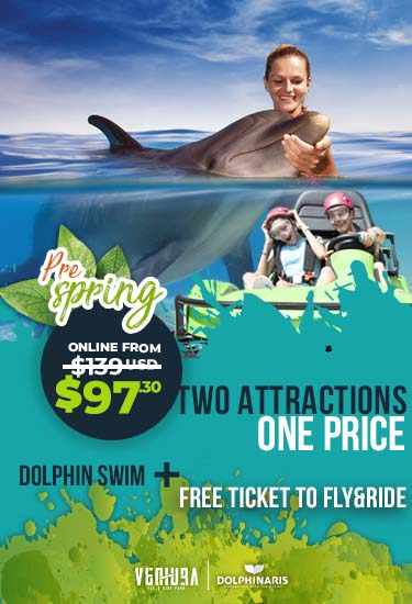 Swim with dolphins and drive gokarts