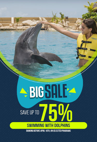 Big Sale Promotion