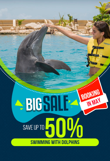 Dolphinaris Big Sale