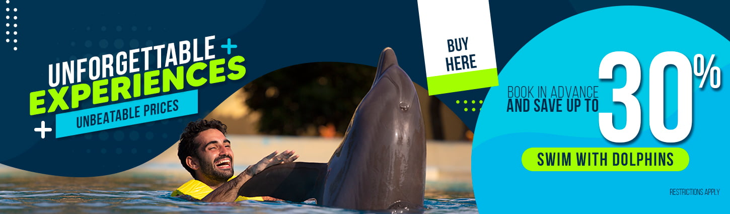 Unforgettable Experiences at Dolphinaris