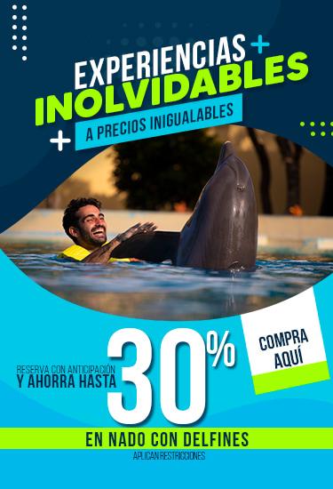 Un hombre nadando con un delfin