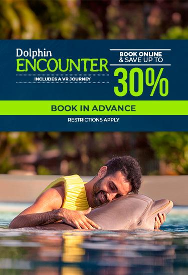 Dolphin Friendly Encounter