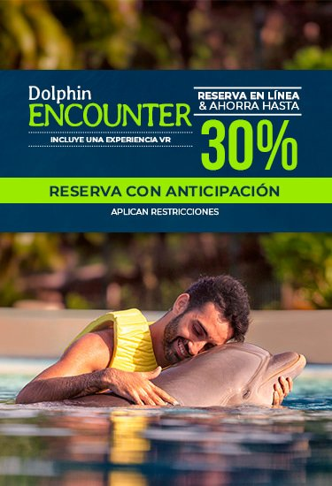 Dolphin experience at Dolphinaris