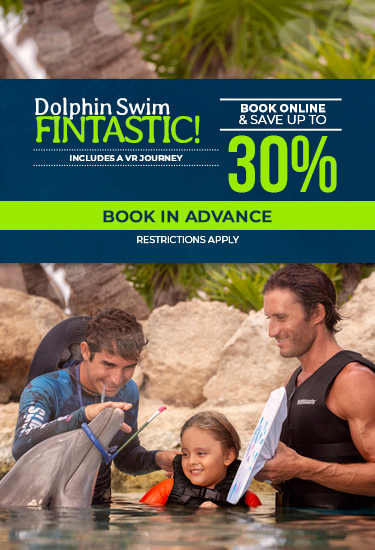 Dolphin Swin Fintastic Discounts
