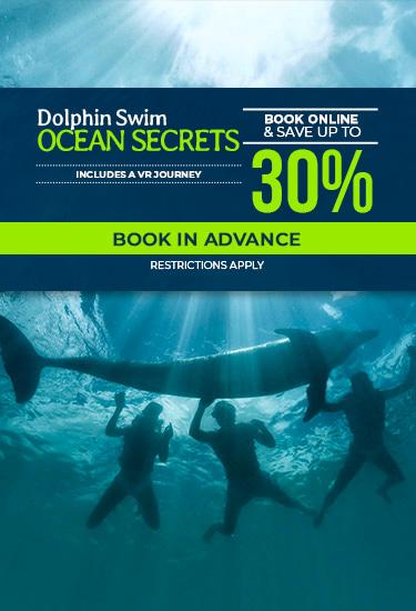 Dolphin Swim Ocean Secrets