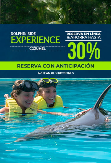 Dolphin Ride Experience at Cozumel