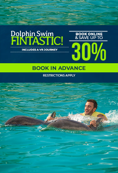 Dolphin Swim Fintastic