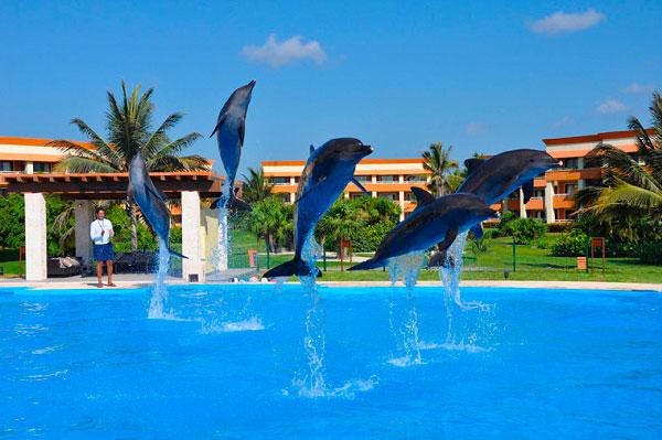 5 Datos interesantes sobre los delfines nariz de botella Santando