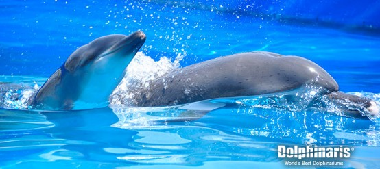 5 Interesting Facts About Bottlenose Dolphins