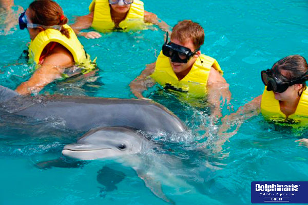 5 bestplaces for dolphin swims in the riviera maya cancun